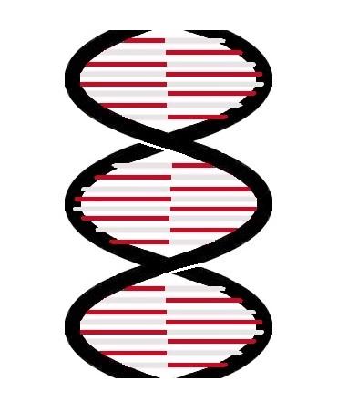 10.04.19  Biomimetic materials: opportunities in biomedicine
